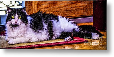 House Cat Hanging Out Metal Print
