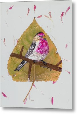 House Finch Metal Print
