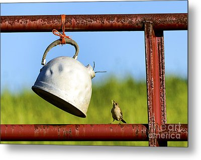 House Wren Feeding Offspring Metal Print by Thomas R Fletcher