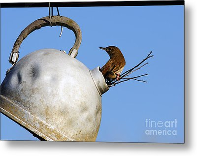 House Wren In New Home Metal Print by Thomas R Fletcher
