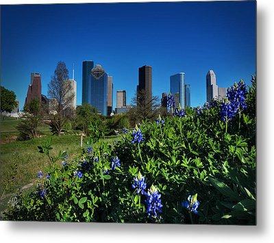 Houston Bluebonnets 001 Metal Print by Lance Vaughn