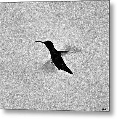 Hover Of The Hummingbird Metal Print