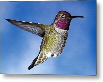 Hovering In Sky Metal Print