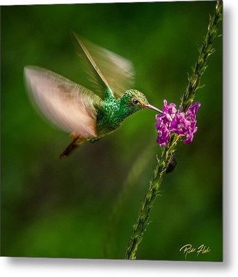 Metal Print featuring the photograph Hovering In The Vervain  by Rikk Flohr