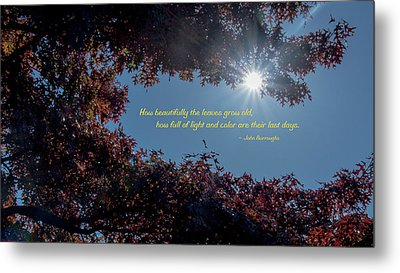 How Beautifully The Leaves Grow Old Metal Print by Mick Anderson