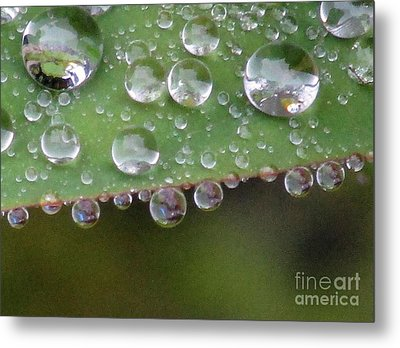 How Many Raindrops Can A Leaf Holds. Metal Print