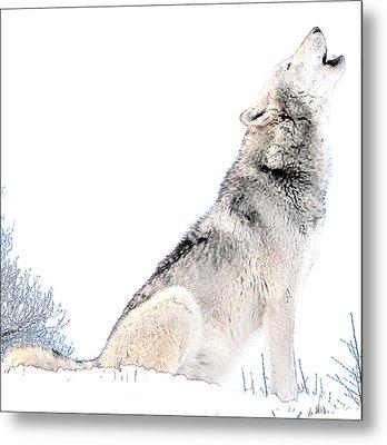 Howling Wolf 1 Metal Print