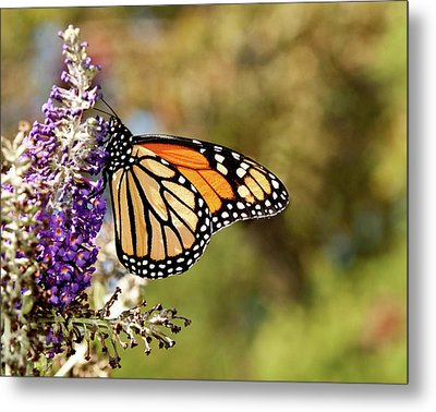 Metal Print featuring the photograph Hues Of Autumn Monarch by Lara Ellis