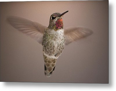 Metal Print featuring the digital art Hummer Love by Holly Ethan