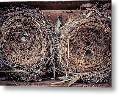 Humming Bird Nests Metal Print