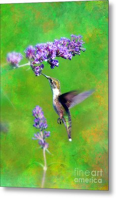 Humming Bird Visit Metal Print by Lila Fisher-Wenzel