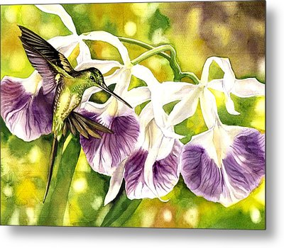 Humming Bird With Orchids Metal Print by Alfred Ng