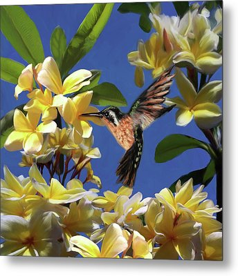 Hummingbird 01 Metal Print