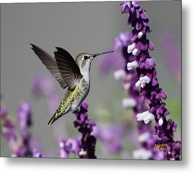 Hummingbird And Purple Flowers Metal Print