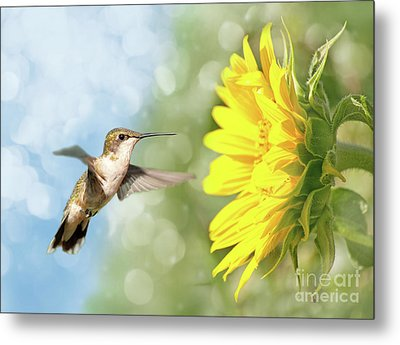 Hummingbird And Sunflower Metal Print