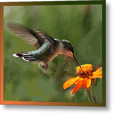 Hummingbird Art Metal Print
