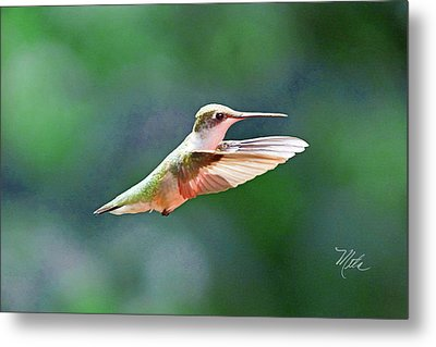 Hummingbird Flying Metal Print by Meta Gatschenberger