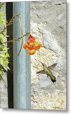 Hummingbird - Greeting Card Metal Print by Allen Sheffield