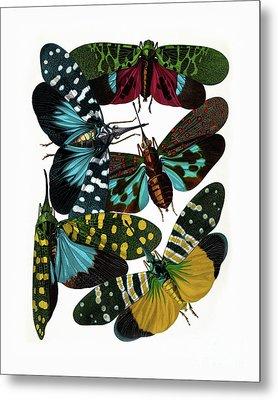 Hummingbird Hawk Moths, Vintage Etomology Illustration Metal Print by Tina Lavoie