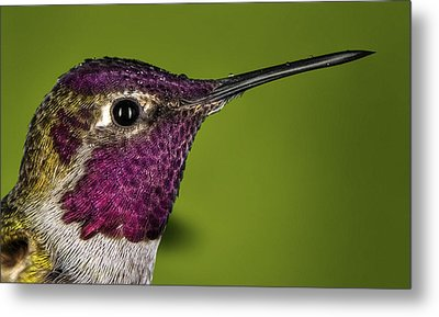 Hummingbird Head Shot With Raindrops Metal Print by William Lee