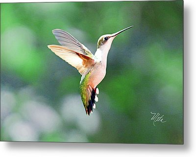 Hummingbird Hovering Metal Print by Meta Gatschenberger