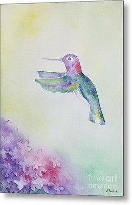 Hummingbird In Flight Metal Print by Jordan Parker