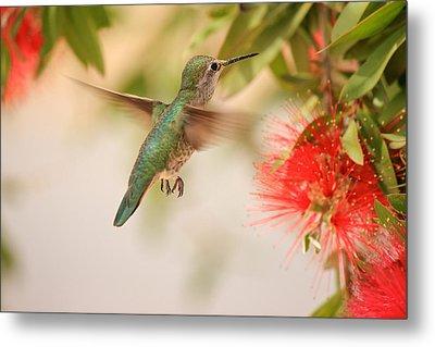 Hummingbird In Paradise Metal Print by Penny Meyers
