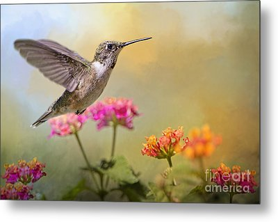 Hummingbird In The Garden Metal Print by Bonnie Barry