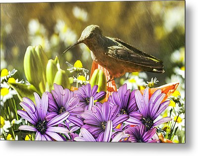 Hummingbird In The Spring Rain Metal Print by Diane Schuster