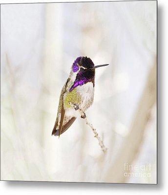 Hummingbird Larger Background Metal Print by Rebecca Margraf
