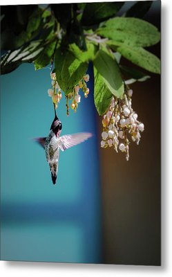 Hummingbird Moment Metal Print by Mark Dunton