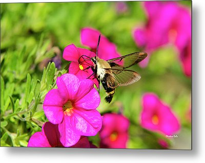 Metal Print featuring the photograph Hummingbird Moth by Christina Rollo