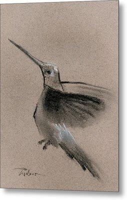 Fine Art Charcoal Rendering Of A Hummingbird In Flight. Metal Print by Ron Wilson