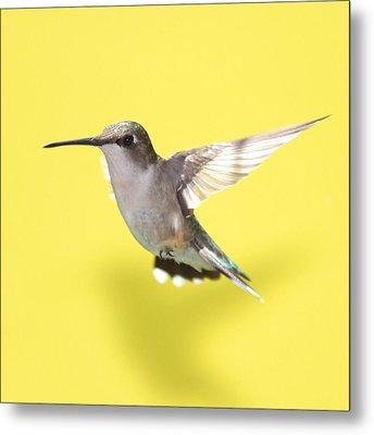 Hummingbird On Yellow 1 Metal Print by Robert  Suits Jr