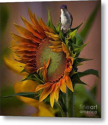 Hummingbird Sitting On Top Of The Sun Metal Print