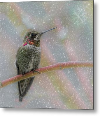 Metal Print featuring the photograph Hummingbird Snowfall by Angie Vogel