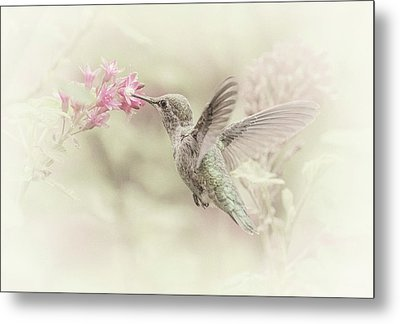 Metal Print featuring the photograph Hummingbird Softly by Angie Vogel