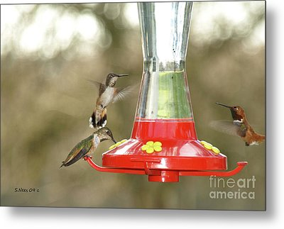 Hummingbird Trio Metal Print