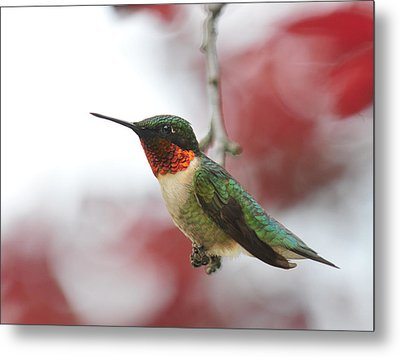 Metal Print featuring the photograph Hummingbird Watch Tower by Lara Ellis