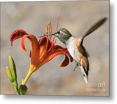 Hummingbird Whisper  Metal Print by Carol Groenen
