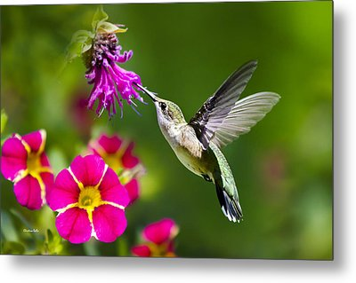 Metal Print featuring the photograph Hummingbird With Flower by Christina Rollo