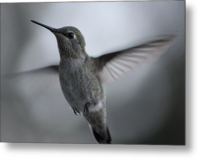 Metal Print featuring the photograph Hummm by Cathie Douglas