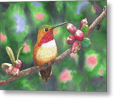 Hummy Metal Print by Catherine G McElroy