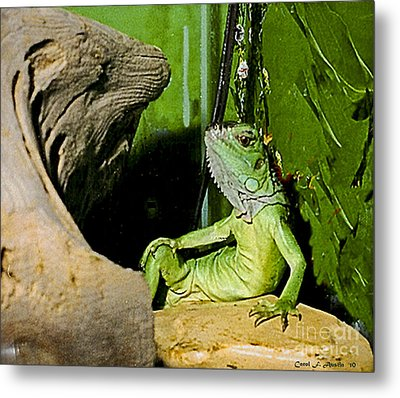 Humorous Pet Iguana Photo Metal Print by Carol F Austin