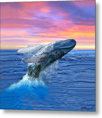 Humpback Whale Breaching At Sunset Metal Print