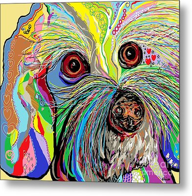 Hunter The Bichon . . . He's A Shoe Man Metal Print