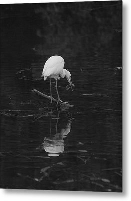 Metal Print featuring the photograph Hunting Egret by Joshua House