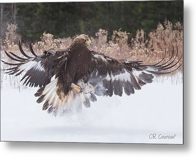Hunting In The Snow Metal Print by CR Courson