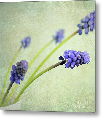 Hyacinth Grape Metal Print by Lyn Randle