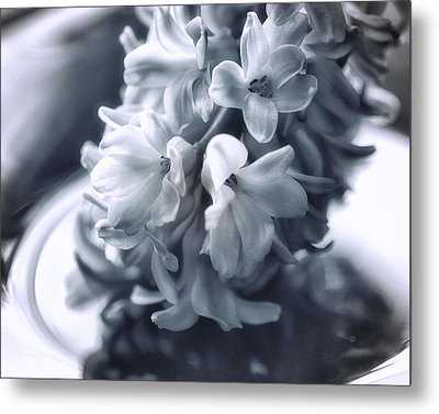 Hyacinth Plated Metal Print